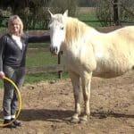 Begegnung von Mensch und Pferd im Coaching