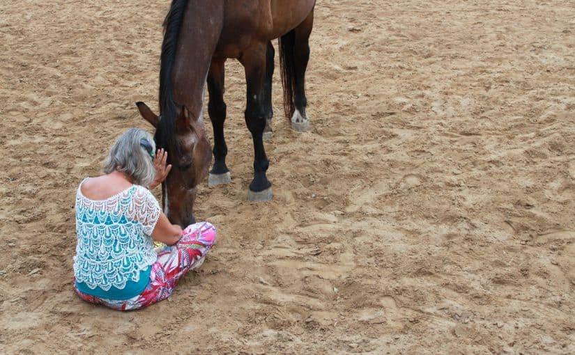 Nähe zwischen Mensch und Pferd
